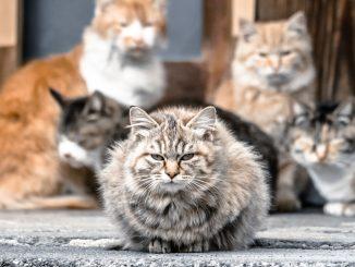 ネコ観光に困惑する自治体の意外な本音